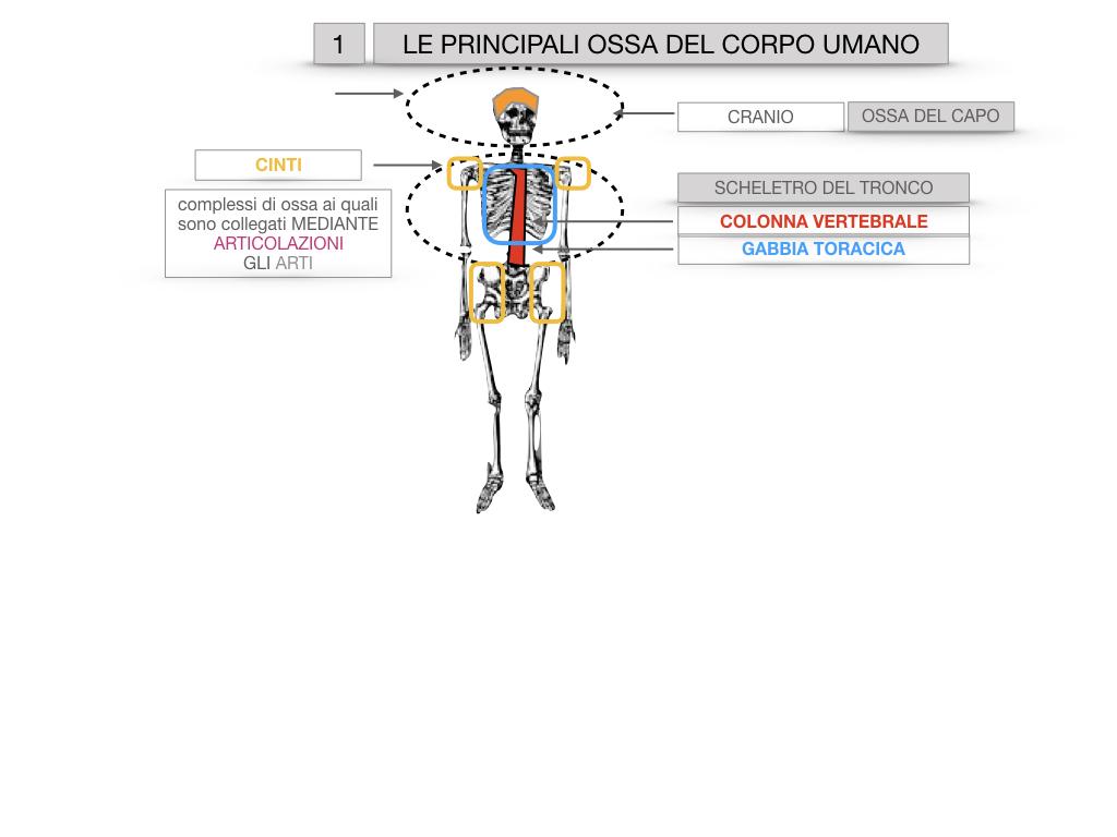 7. LE PRINCIPALI OSSA DEL CORO UMANO_SIMULAZIONE.007