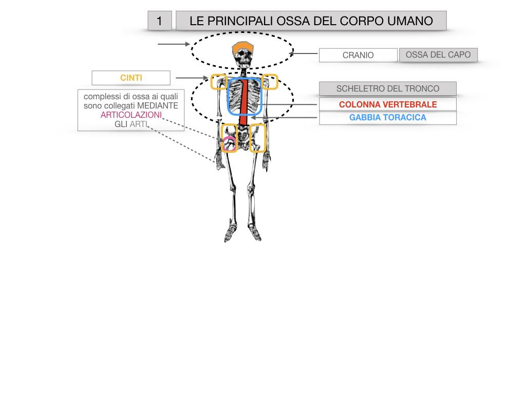 7. LE PRINCIPALI OSSA DEL CORO UMANO_SIMULAZIONE.008
