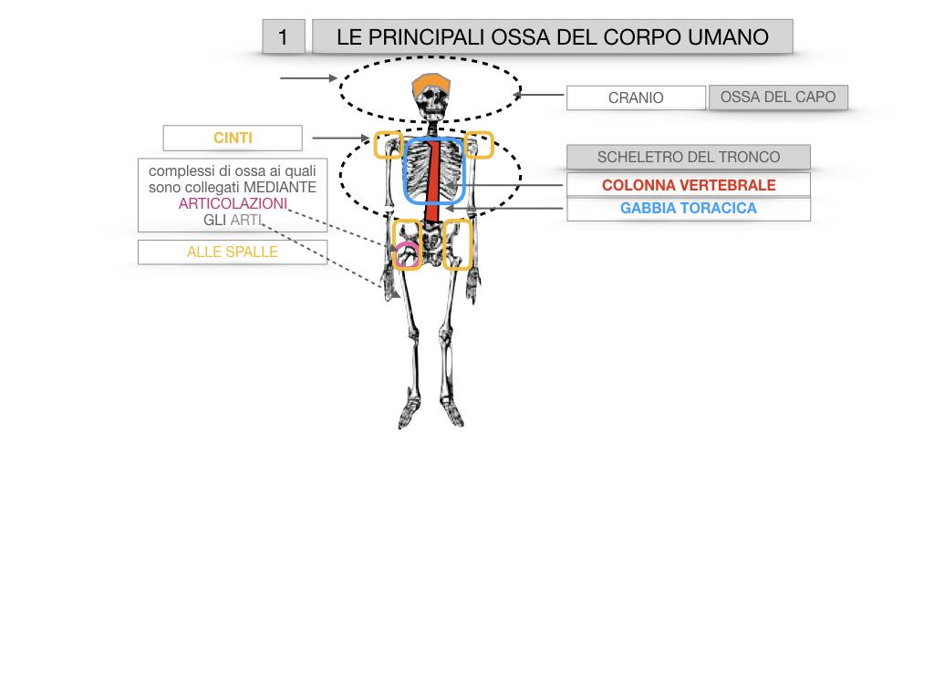 7. LE PRINCIPALI OSSA DEL CORO UMANO_SIMULAZIONE.009