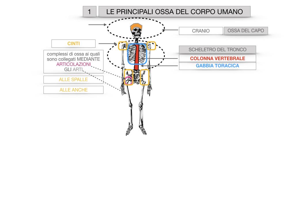 7. LE PRINCIPALI OSSA DEL CORO UMANO_SIMULAZIONE.010