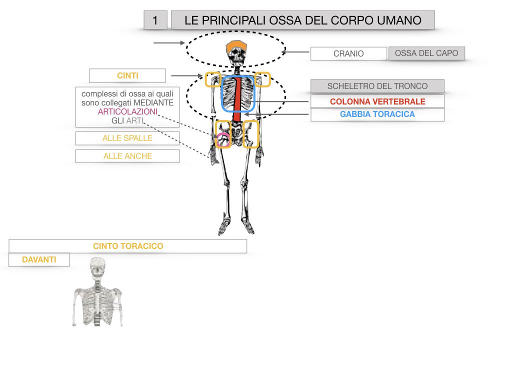 7. LE PRINCIPALI OSSA DEL CORO UMANO_SIMULAZIONE.011