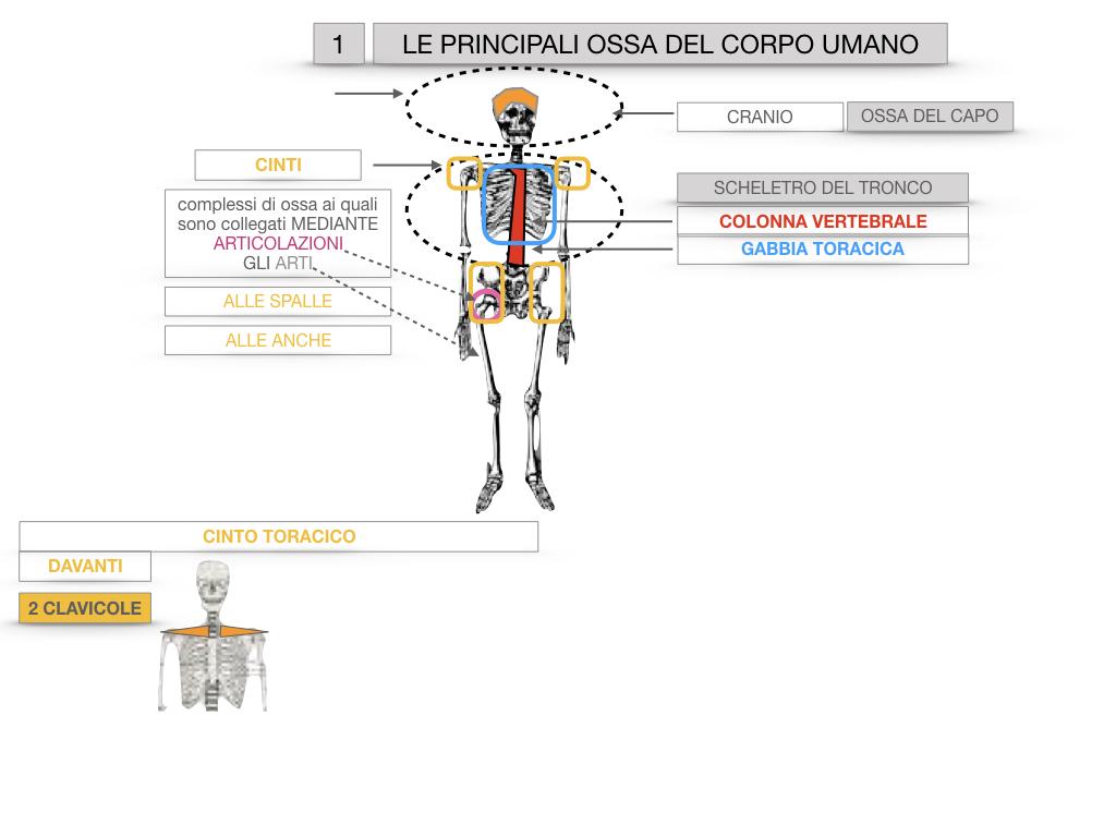 7. LE PRINCIPALI OSSA DEL CORO UMANO_SIMULAZIONE.012