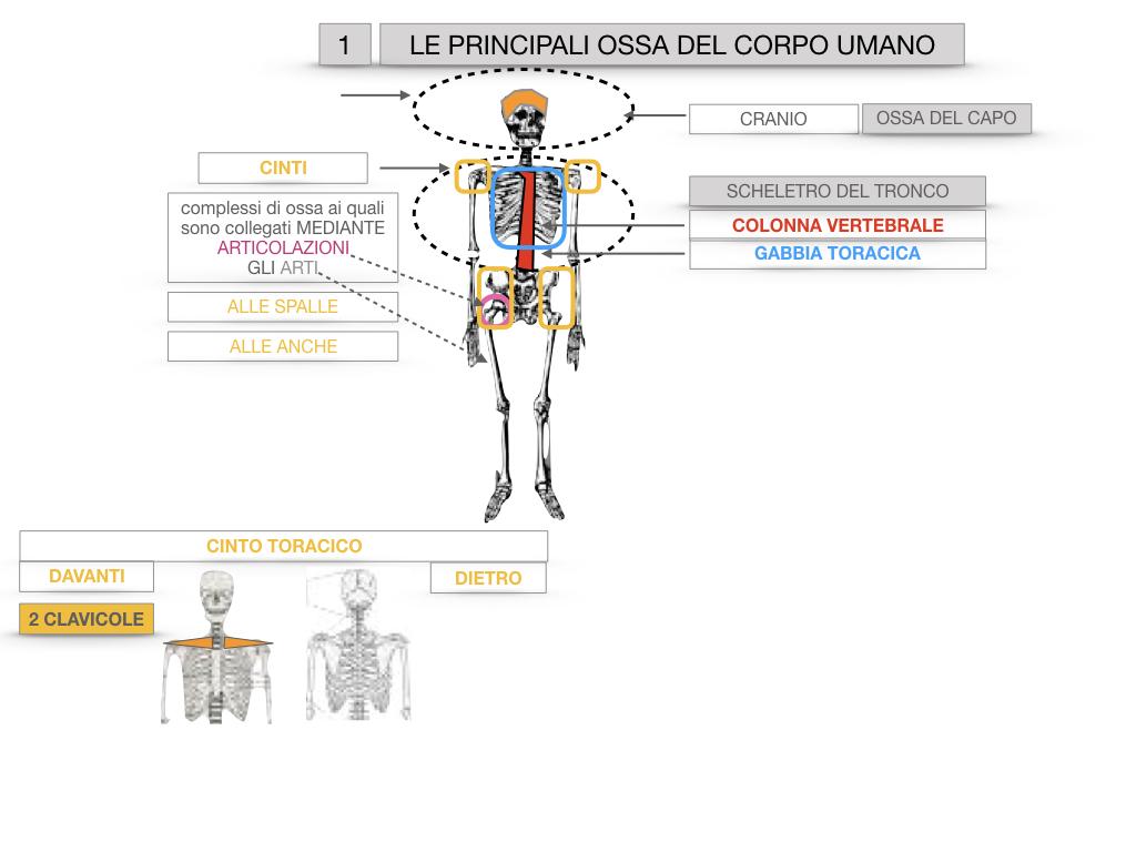 7. LE PRINCIPALI OSSA DEL CORO UMANO_SIMULAZIONE.013