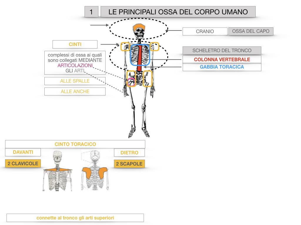 7. LE PRINCIPALI OSSA DEL CORO UMANO_SIMULAZIONE.015