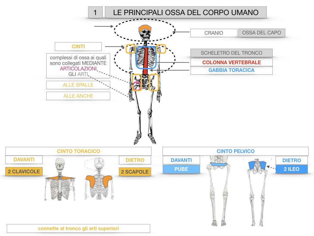 7. LE PRINCIPALI OSSA DEL CORO UMANO_SIMULAZIONE.019