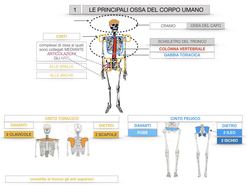7. LE PRINCIPALI OSSA DEL CORO UMANO_SIMULAZIONE.020