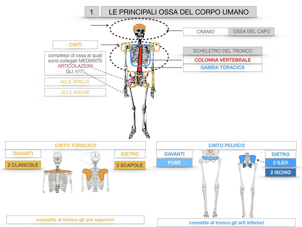 7. LE PRINCIPALI OSSA DEL CORO UMANO_SIMULAZIONE.021