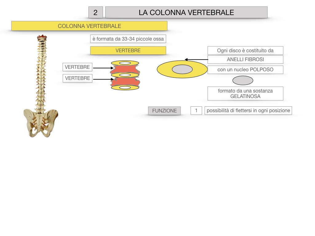 7. LE PRINCIPALI OSSA DEL CORO UMANO_SIMULAZIONE.031