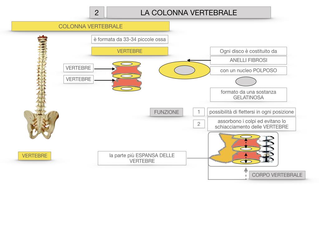 7. LE PRINCIPALI OSSA DEL CORO UMANO_SIMULAZIONE.035