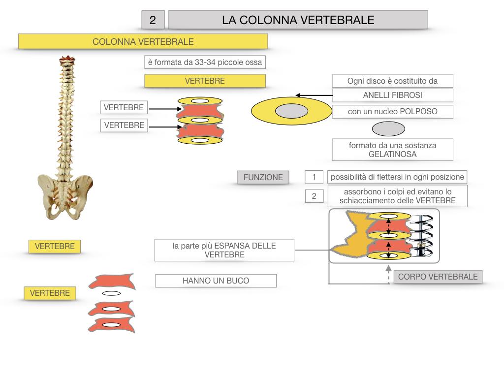 7. LE PRINCIPALI OSSA DEL CORO UMANO_SIMULAZIONE.036