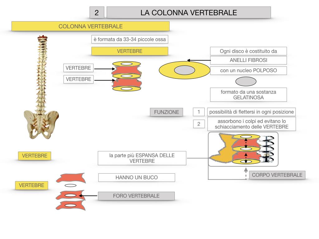 7. LE PRINCIPALI OSSA DEL CORO UMANO_SIMULAZIONE.037