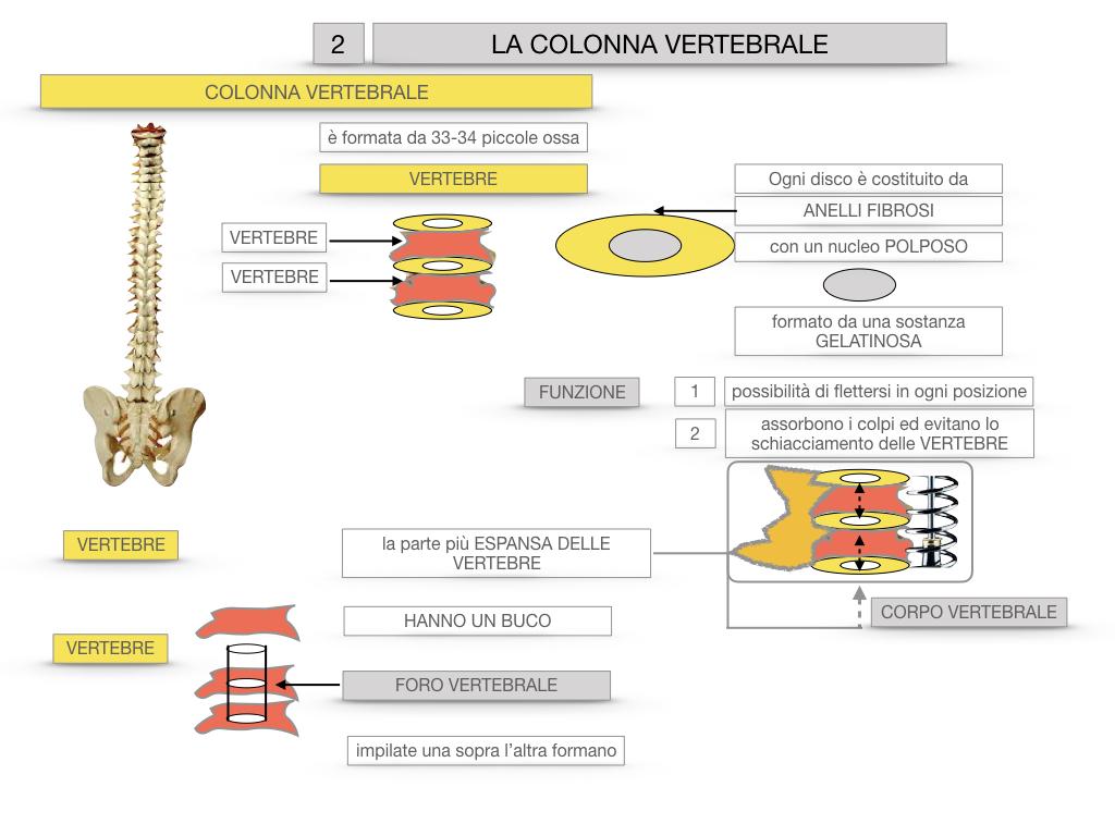 7. LE PRINCIPALI OSSA DEL CORO UMANO_SIMULAZIONE.038