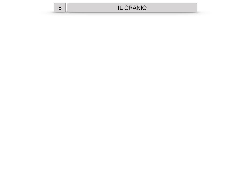 8. LE OSSA DEL CRANIO E DENTI_SIMULAZIONE.001