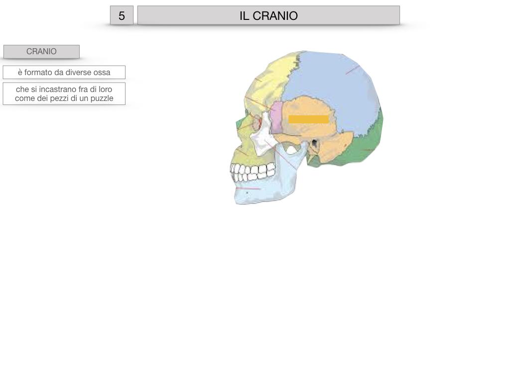 8. LE OSSA DEL CRANIO E DENTI_SIMULAZIONE.004