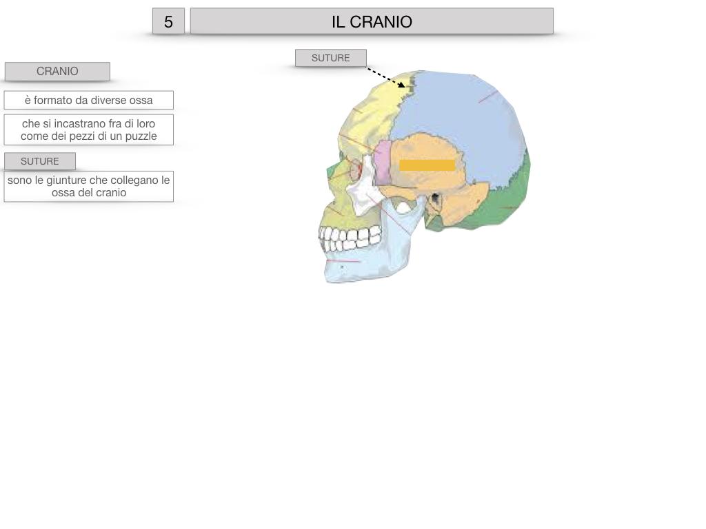 8. LE OSSA DEL CRANIO E DENTI_SIMULAZIONE.006