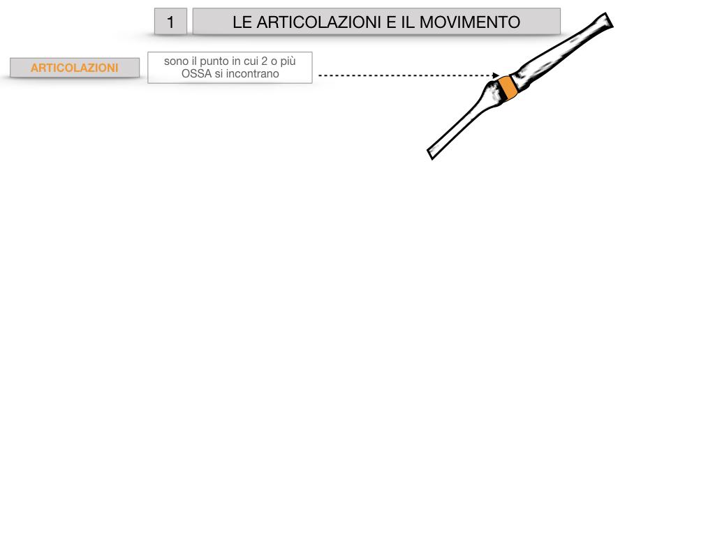 9. LE ARTICOLAZIONI_CARTACEO_SIMULAZIONE.003