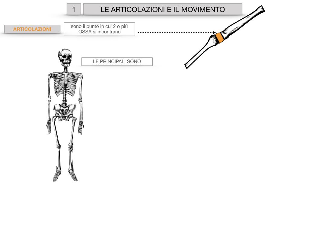 9. LE ARTICOLAZIONI_CARTACEO_SIMULAZIONE.004