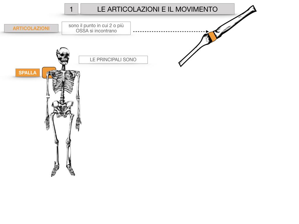 9. LE ARTICOLAZIONI_CARTACEO_SIMULAZIONE.005