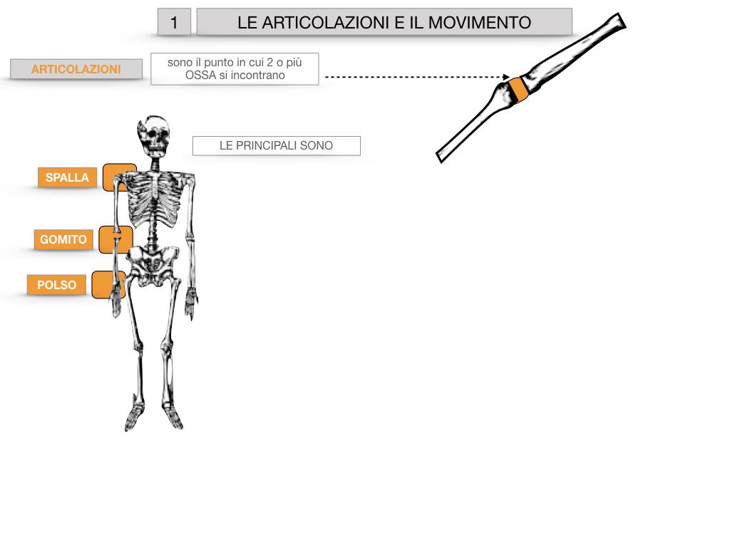 9. LE ARTICOLAZIONI_CARTACEO_SIMULAZIONE.007