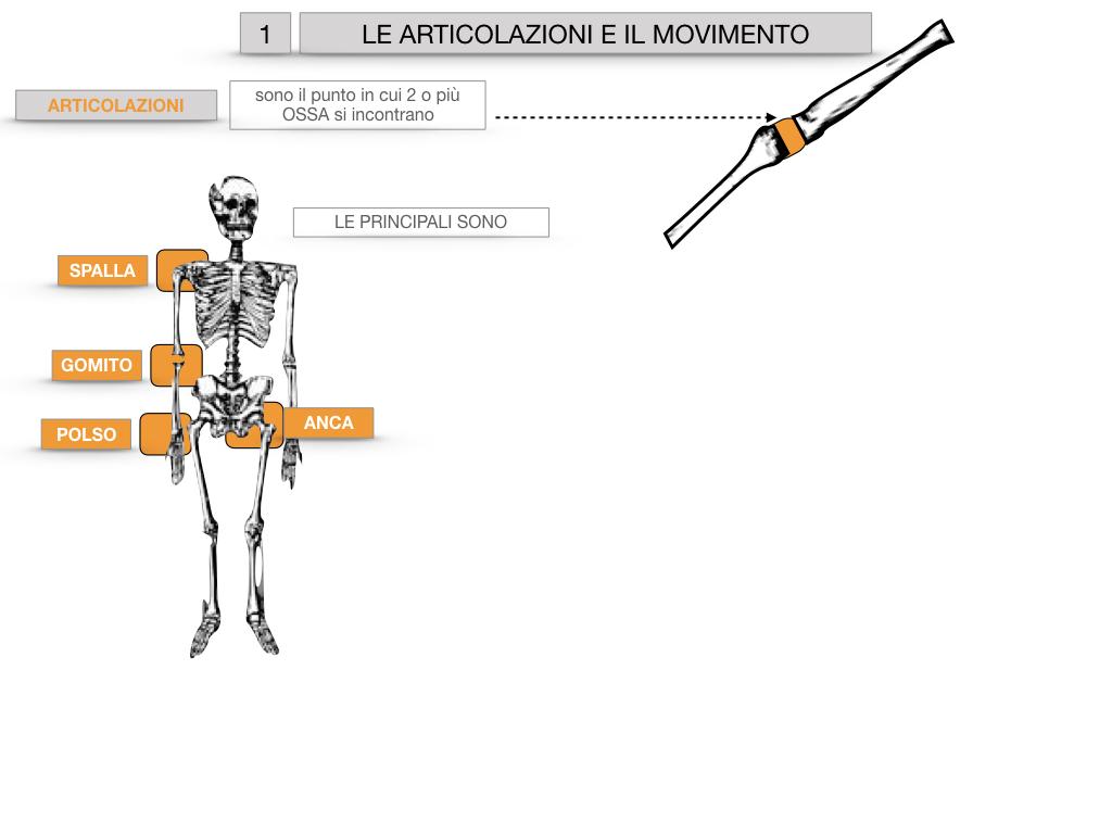 9. LE ARTICOLAZIONI_CARTACEO_SIMULAZIONE.008