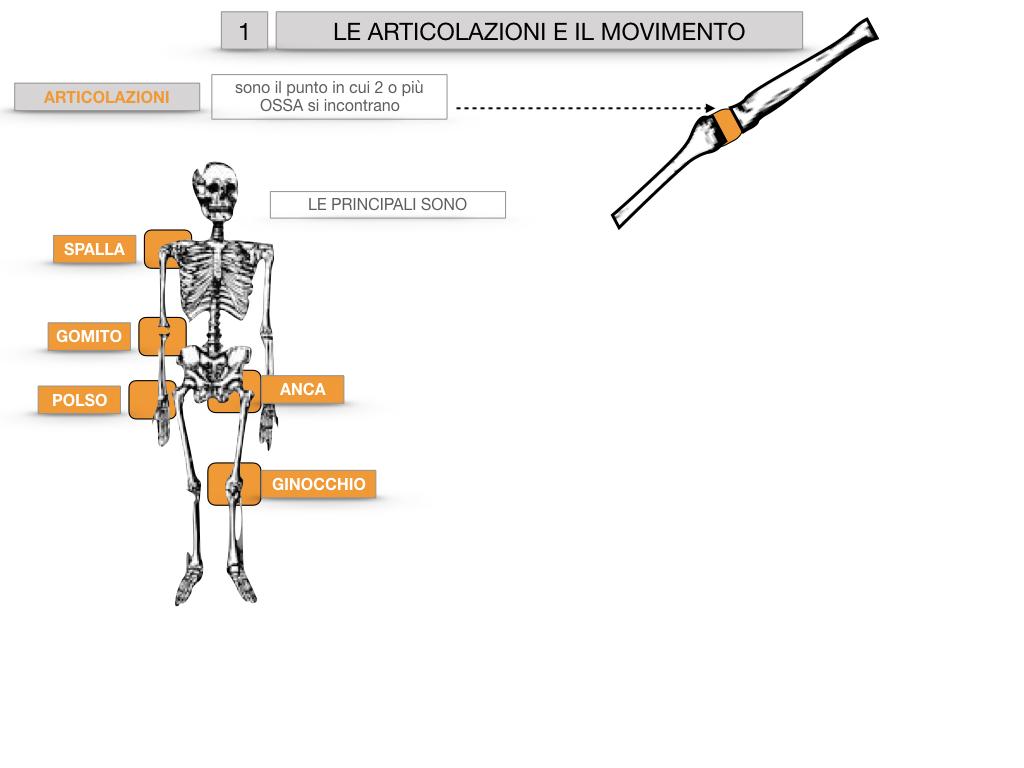 9. LE ARTICOLAZIONI_CARTACEO_SIMULAZIONE.009
