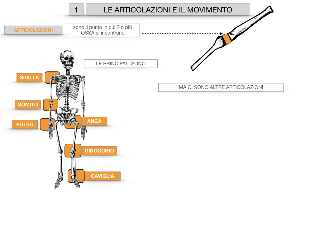 9. LE ARTICOLAZIONI_CARTACEO_SIMULAZIONE.011