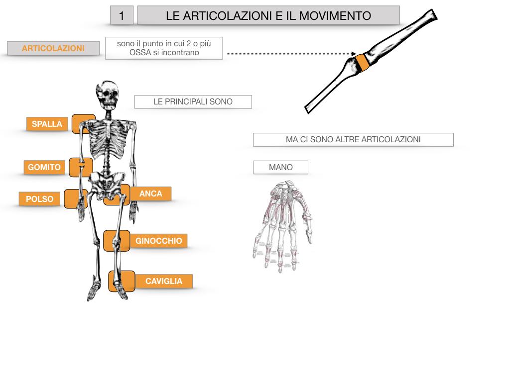9. LE ARTICOLAZIONI_CARTACEO_SIMULAZIONE.012