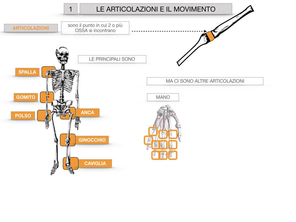 9. LE ARTICOLAZIONI_CARTACEO_SIMULAZIONE.013