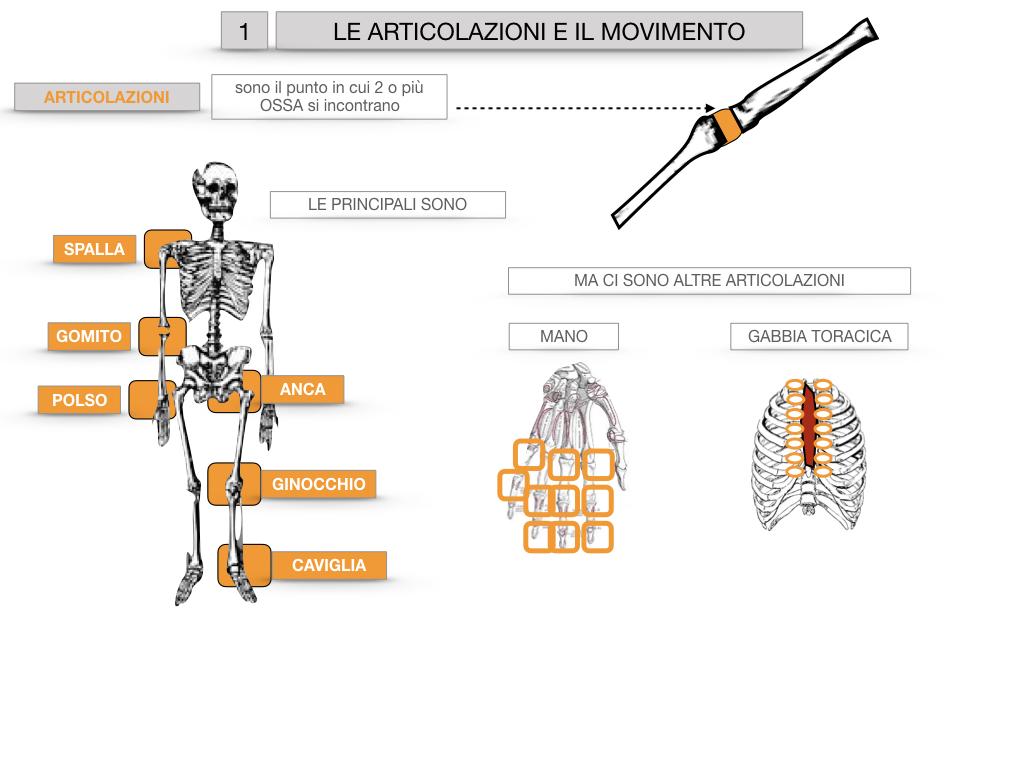 9. LE ARTICOLAZIONI_CARTACEO_SIMULAZIONE.014