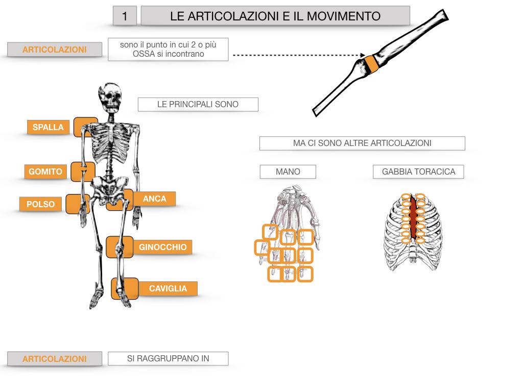 9. LE ARTICOLAZIONI_CARTACEO_SIMULAZIONE.015