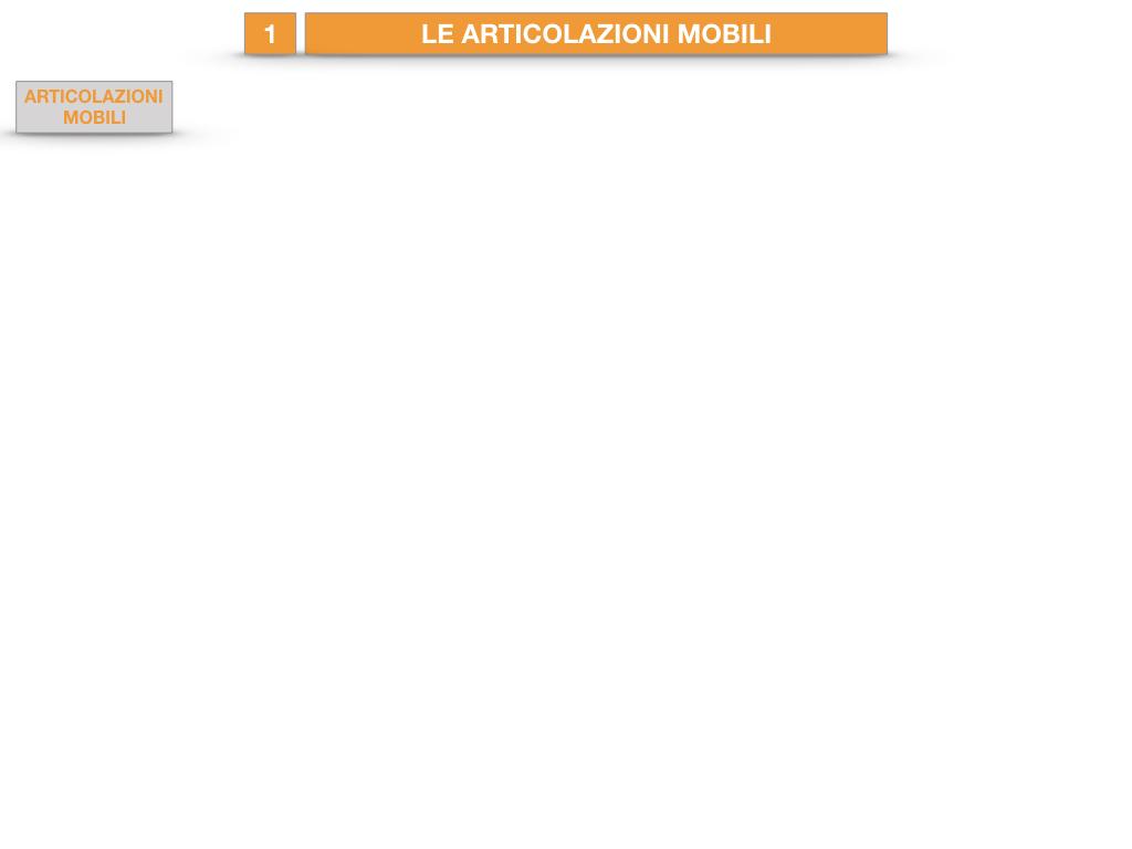 9. LE ARTICOLAZIONI_CARTACEO_SIMULAZIONE.019
