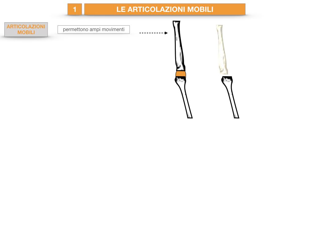 9. LE ARTICOLAZIONI_CARTACEO_SIMULAZIONE.021