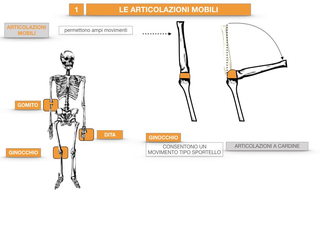 9. LE ARTICOLAZIONI_CARTACEO_SIMULAZIONE.028