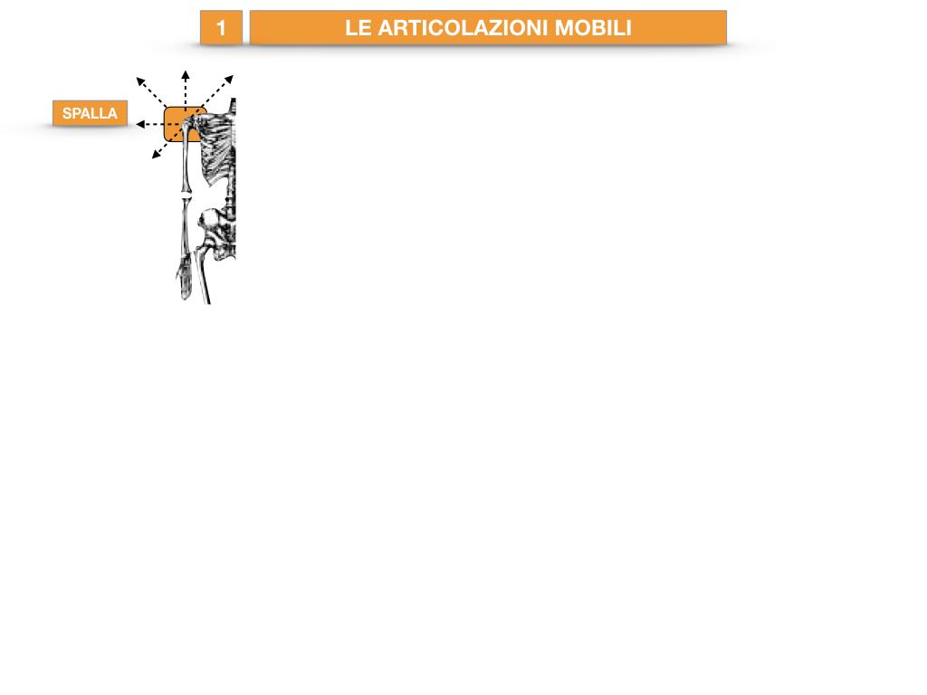 9. LE ARTICOLAZIONI_CARTACEO_SIMULAZIONE.035