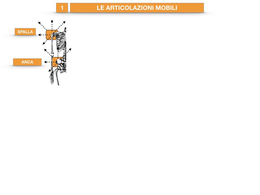 9. LE ARTICOLAZIONI_CARTACEO_SIMULAZIONE.036