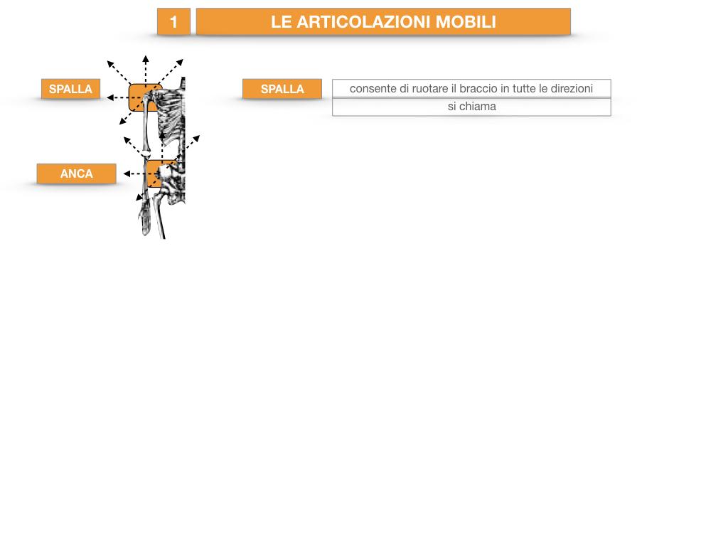 9. LE ARTICOLAZIONI_CARTACEO_SIMULAZIONE.038