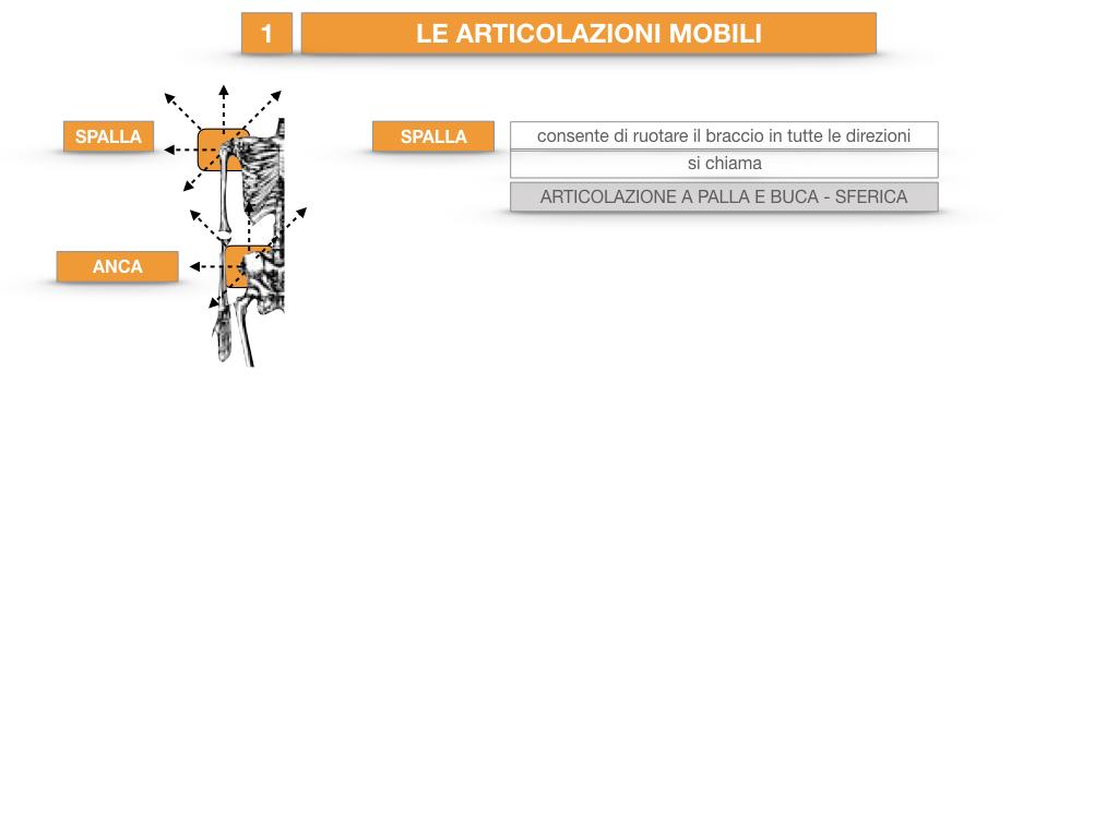 9. LE ARTICOLAZIONI_CARTACEO_SIMULAZIONE.039